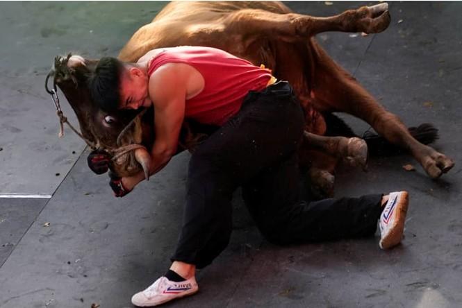 Китайски майстор на кунг фу срещу бик (ВИДЕО)