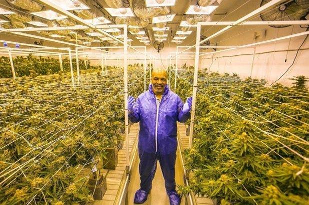 Майк Тайсън призна: Пушим по 10 тона трева месечно