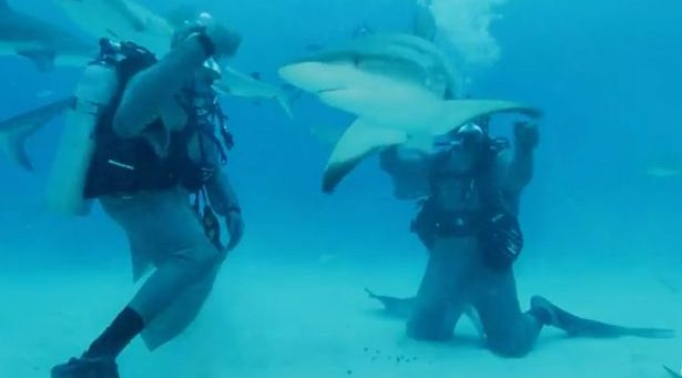 Уплашеният до смърт Тайсън нокаутира акула (ВИДЕО)