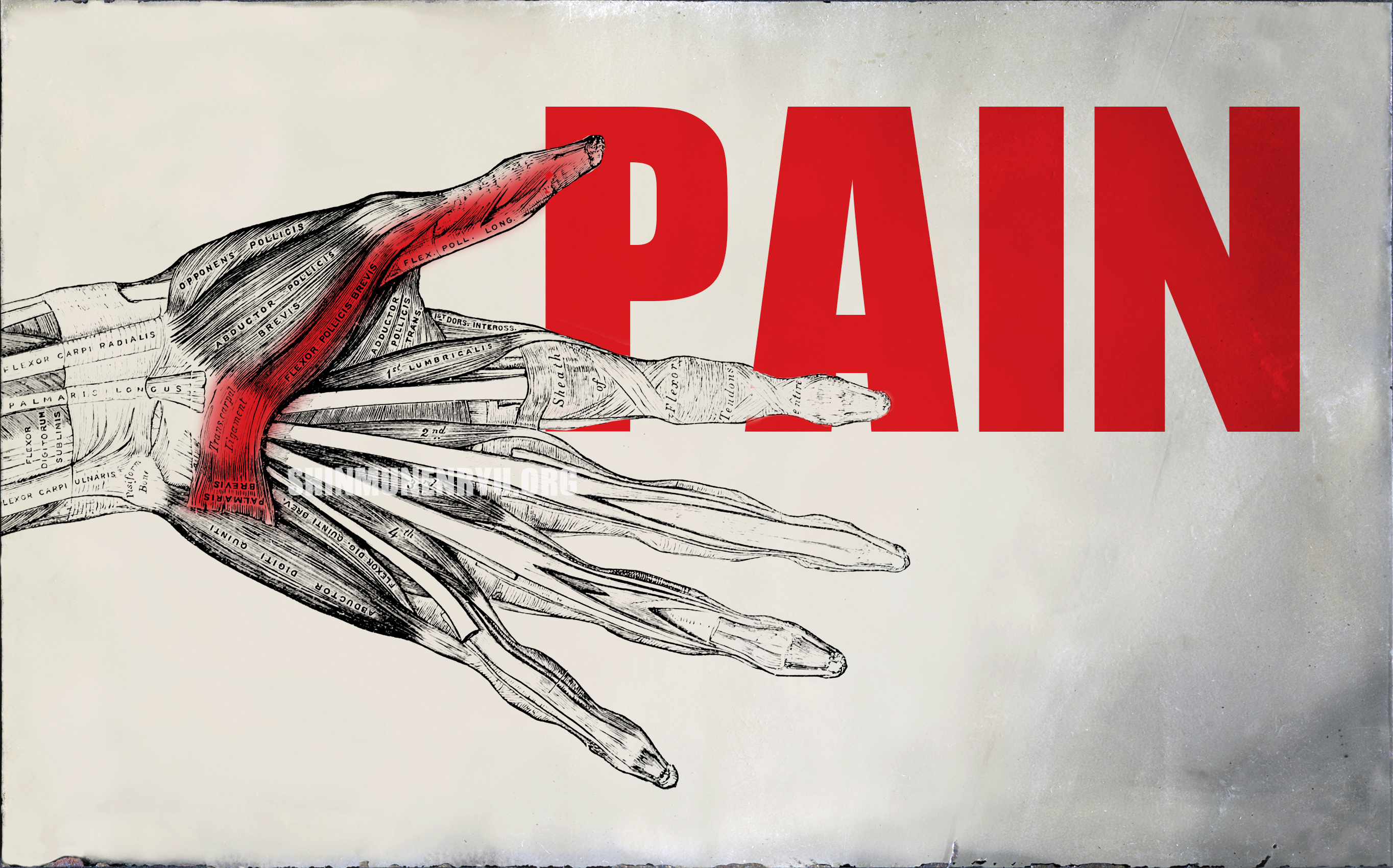 Болката и бойните спортове